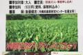 「沖縄の紅茶の話」 開催